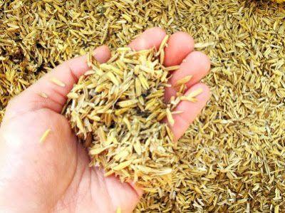 Maklerzentrum Schweiz AG - Die Spreu vom Weizen trennen