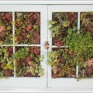 Using an old window frame I made a vertical succulent garden. I staple… :: Hometalk