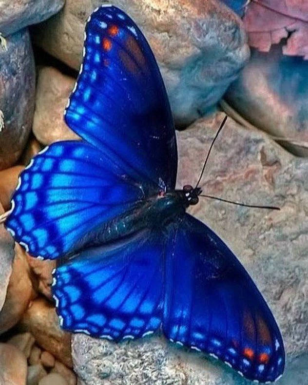 Elegant Butterflies Beautiful Nature Pattern Instacool Me Love Magical Electricblue Butterfly Photos Butterfly Pictures Beautiful Butterflies