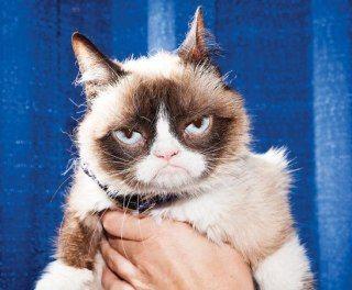 Нахмурила на миллион. Как Недовольная кошка строит медиаимперию. Владелица самого известного в мире кота уволилась из ресторана, чтобы сконцентрироваться на карьере своего питомца. В этот момент понятно лишь то, что кошачьим видео в интернете стало тесно.