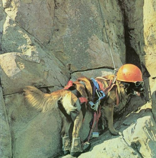 Best. Dog. Ever. Or maybe best owners. Climber dog WIN. #takemorefurryfriends #takemorefriends #yakima