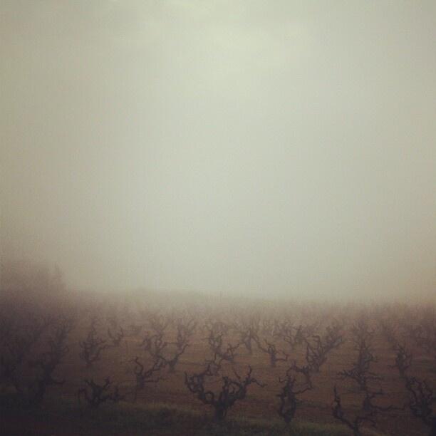 Niebla en el Penedès