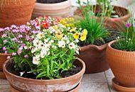 Piante perenni per il balcone: le 7 più facili da curare