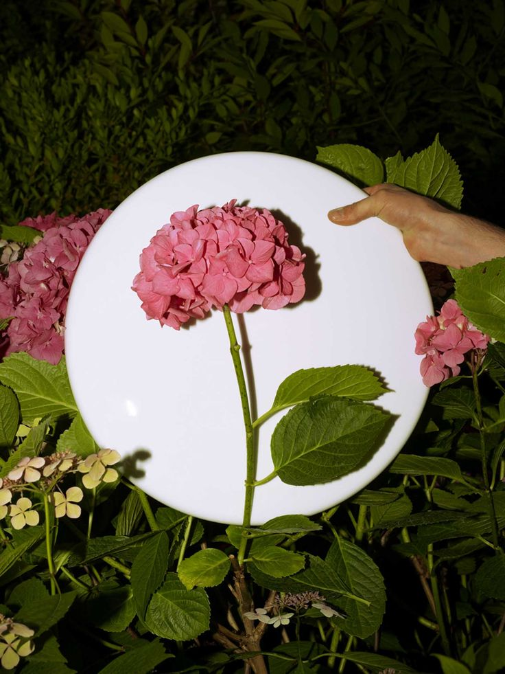Adrien Rovero - bring white card with you to 'mask' or 'frame' flowers and foliage.