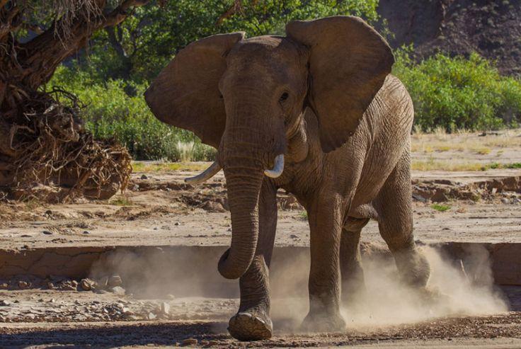 World Elephant Day by Paul Goldstein