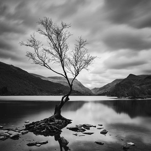 At this years International Black and White Spider Awards @steve_gosling achieved six nominations and one Honourable Mention in three different categories (Architecture Fine Art and Nature) for his breathtaking pictures. Four of Steves pictures were shot with Phase One equipment. This is Standing Proud (Llyn Padarn Snowdonia North Wales) Taken on the same trip to North Wales as the dawn image. This tree has been photographed many times before by hundreds of photographers but Id never…