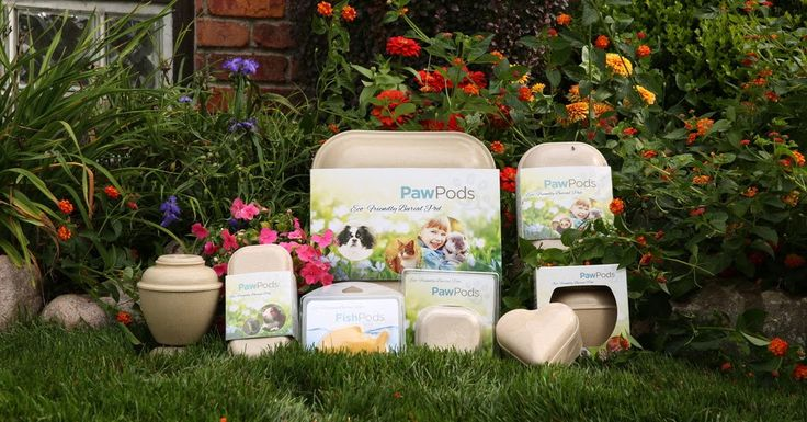 Paw Pods  Losing a pet is a very hard thing to do. For most of us our pets are family. If only there were an affordable way to bury our little furry family with dignity and proper respect.  Well now there is. The people over at PawPods have developed a biodegradable pet coffin designed to inter our loved ones in a way that is affordable and dignified. These pet coffins range from about $100-150 on Amazon.com.  No one wants to think about the time when our little family member will no longer…