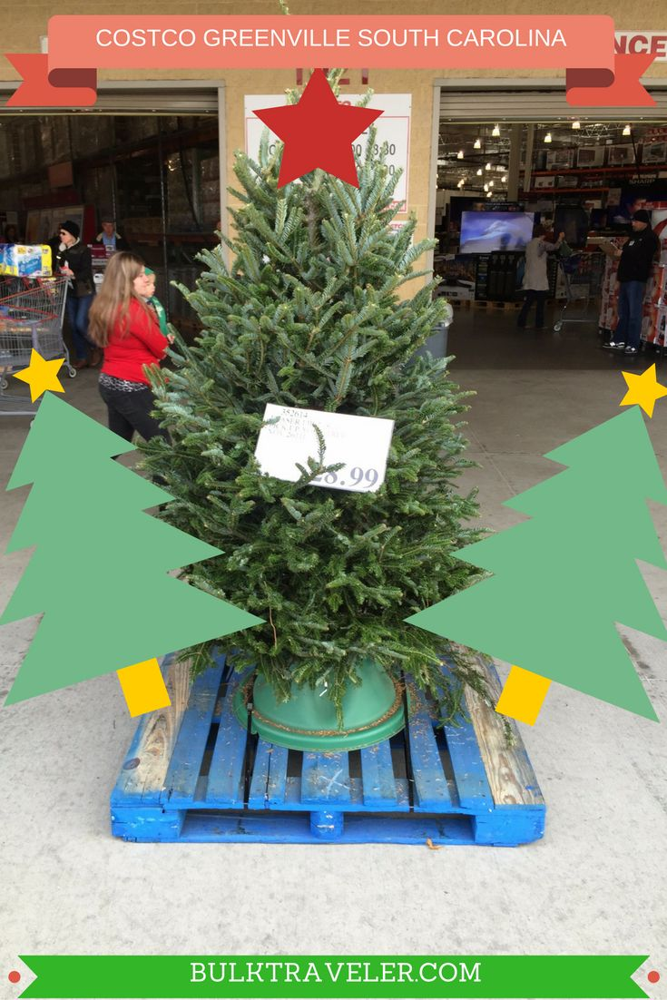 BulkTraveler takes a trip to South Carolina to visit the Costco Greenville, South Carolina location. Costco sells fresh cut Christmas Trees!