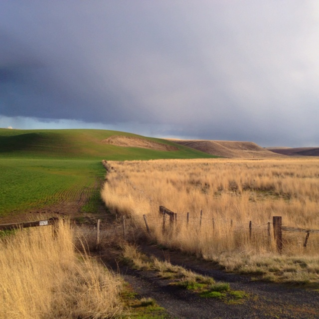 singles in palouse Picture perfect palouse 3,679 likes 98 talking about this sharing photos and experiences on the palouse and the palouse scenic byway.