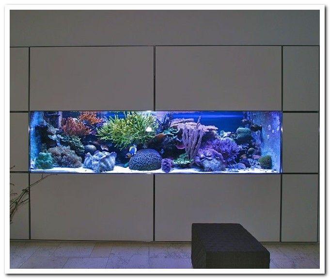 47 Magazine Design Publication Design Inspiration In 2020 Aquarium Fische Aquarien Aquarienfische
