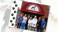 Try this site http://parkervethospital.com/ for more information on Charlotte Veterinarians. Consider teaching your dog hand signals along with verbal commands with the help of Charlotte Veterinarians. Consistency and practice are key to teaching a dog these non-verbal commands.  Try using only verbal commands when the dog is out of sight range, but when close up, only use the hand signals. Follow us: http://charlottevets.wordpress.com