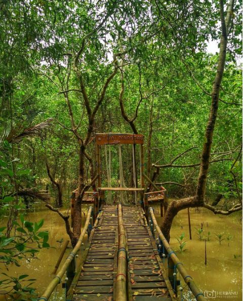 Hutan Mangrove Kulonprogo Jogja 1- Sewa Mobil Jogja Murah  - Sewa Mobil Jogja - Rental Mobil Jogja - Traveljogja.Net - 085879505252