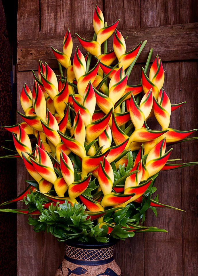 """""""Lobster Claw"""" Heliconia Rostrata, attracts butterflies and hummingbirds."""