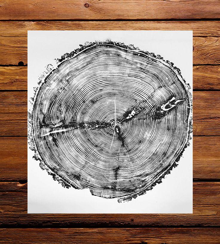 sundance white pine tree ring art print trees tree