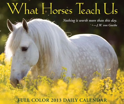 What Horses Teach Us 2013 Boxed Calendar 57159