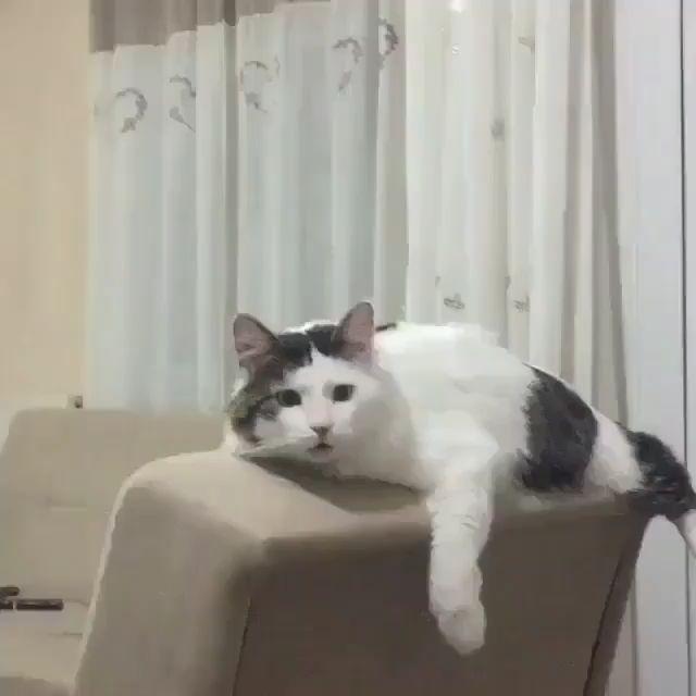 So funny Cat love massage