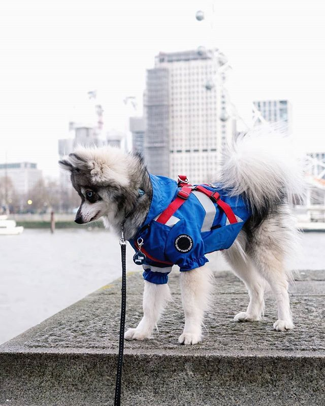 Puppia Is One Of My Favorite Brand For Dog Harness And Jacket Puppia Is A South Korea Brand And Since My Humans Will Be City Dog Alaskan Klee Kai Dog Harness