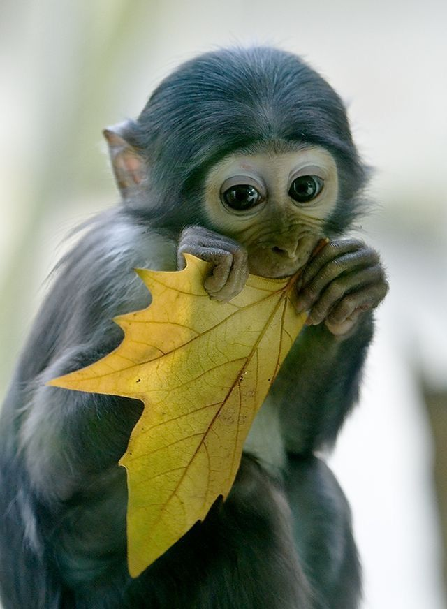 ...just cute!  When I was little I wanted a monkey because I thought they were so cute!