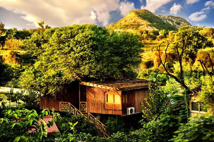 Tree House Resort Jaipur Packages new year 2017 book now-08130781111