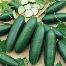 Garden Sweet Burpless Cucumber 1# From The Dirty Gardener