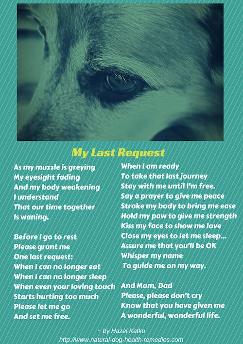 dog dying poem - Google Search | BABY BOY | Pinterest | To ...