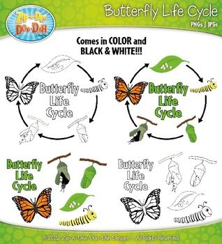 Butterfly Life Cycle Black And White Clip Art