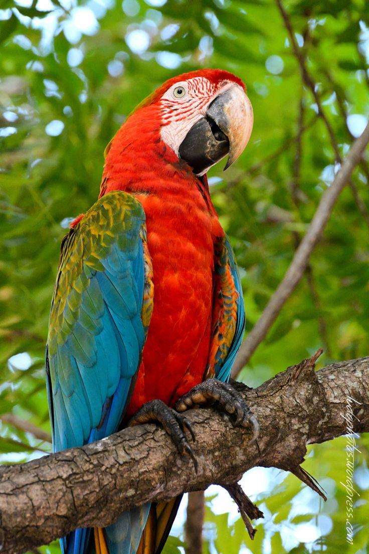 Photograph Macaw by Ludo Koos on 500px Pantanal, Mato Grosso do Sul, Brasil