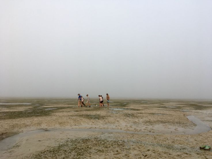 Intrepid seagrass volunteers head out to monitoring site as fog rolls in  over Roebuck Bay, Broome, Australia #BroomeSeagrass ThankYou to our volunteers!