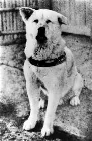 Image result for hachiko a dog's story cast