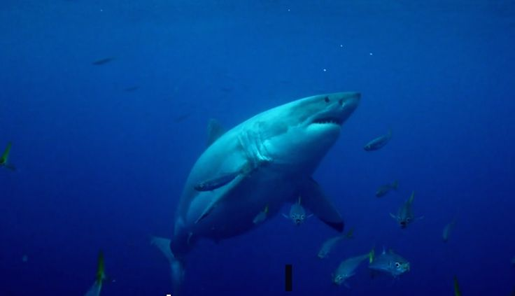 'Mega Shark' episode criticized as a 'low point' for 'Shark Week'  Read more at http://www.grindtv.com/wildlife/mega-shark-episode-criticized-as-a-low-point-for-shark-week/#fvjVbZ0PAZMXgI7X.99