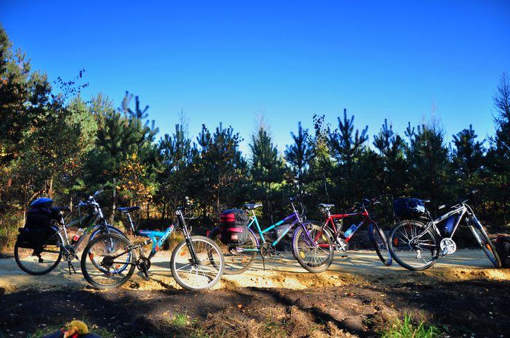 Las drzew i las rowerów. Pniowiec koło T. Gór.