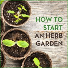 Everything you need to know about starting your own herb garden!