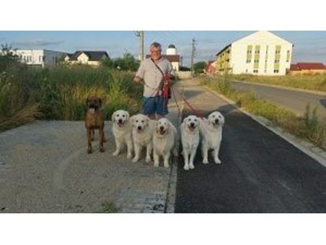 Dresor dresaj caini timisoara Timisoara - Anunturi gratuite de la A-Z