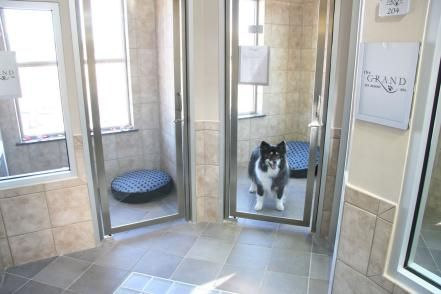 Send your pet to a luxury pet resort to be spoiled with private suites, doggie pools, bedtime stories and more.