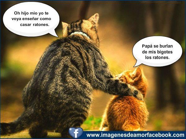 imagenes para facebook | Imágenes para Facebook » imagenes chistosas de amor para facebook (5 ...