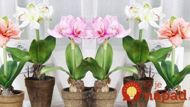 Ako podporiť kvitnutie izbových rastlín? Vyskúšajte trik skúsených záhradkárov!