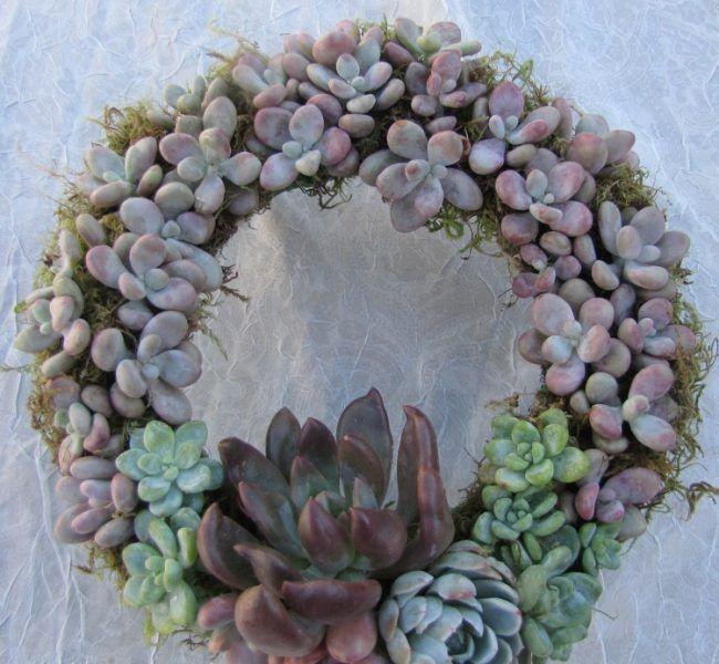 89 best garten diy images on Pinterest Succulents, Gardening and - mein garten rtl