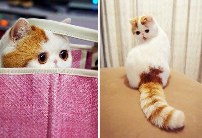 11. Snoopy, o gato mais fofo de todos