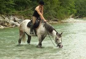 Reiten in Österreich - Vollblutaraber - Referat zum Thema Pferde