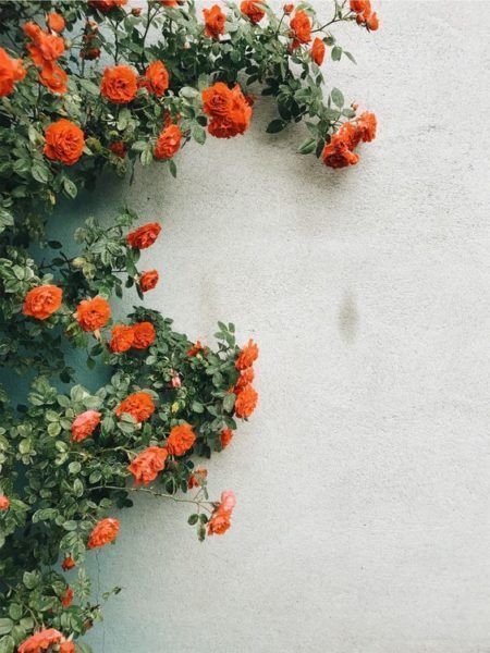 Let it Grow: Top 10 Gardening Tips for Beginners