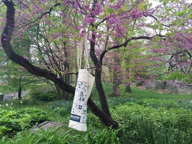 The #WhampPlanet bag just 'hanging' out with a tree in New York's Central Park.