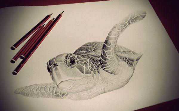 Tortuga Marina  - Animales   Dibujando.net