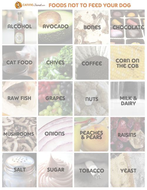 Infographic: List of Foods Not To Feed Your Dog