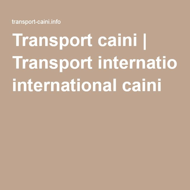 Transport caini | Transport international caini