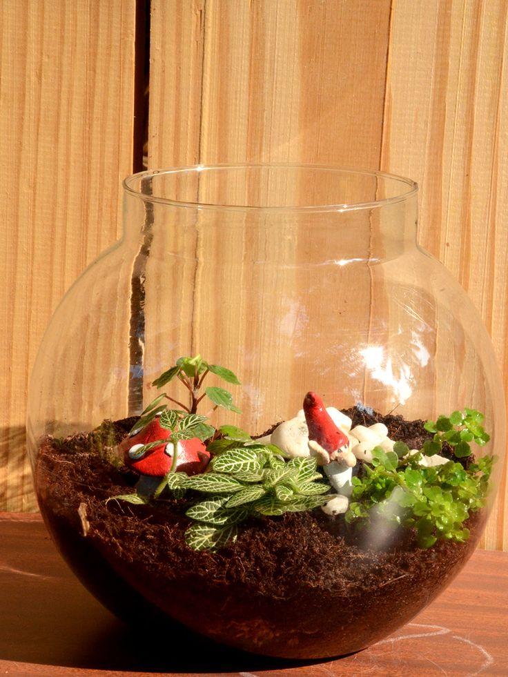 Buy Rain Forest Terrarium