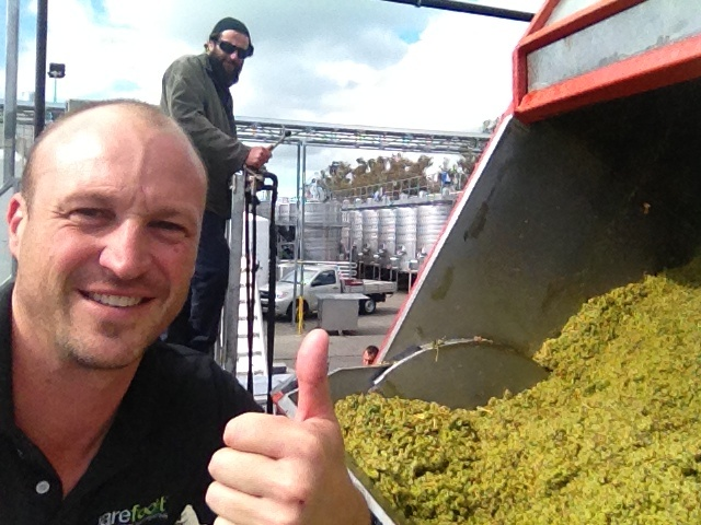 Receiving the first kosher Chardonnay for the season.
