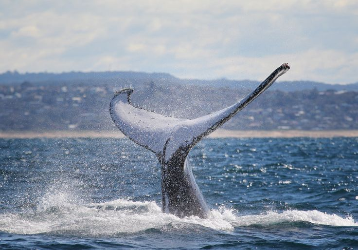 Best Places For Whale Spotting | NSW | Broadsheet Sydney - Broadsheet