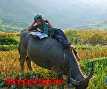 Child-studying-on-buffalo-in-village