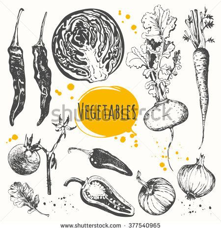 Vector illustration with sketch of mediterranean vegetables. Set of hand drawn zucchini, cherry tomatoes, onions, carrots, cabbage, peppers, turnips. Fresh organic food. Black and white.