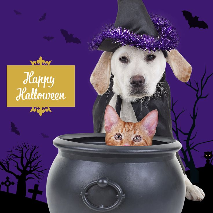 Happy Halloween to our furry-friends!